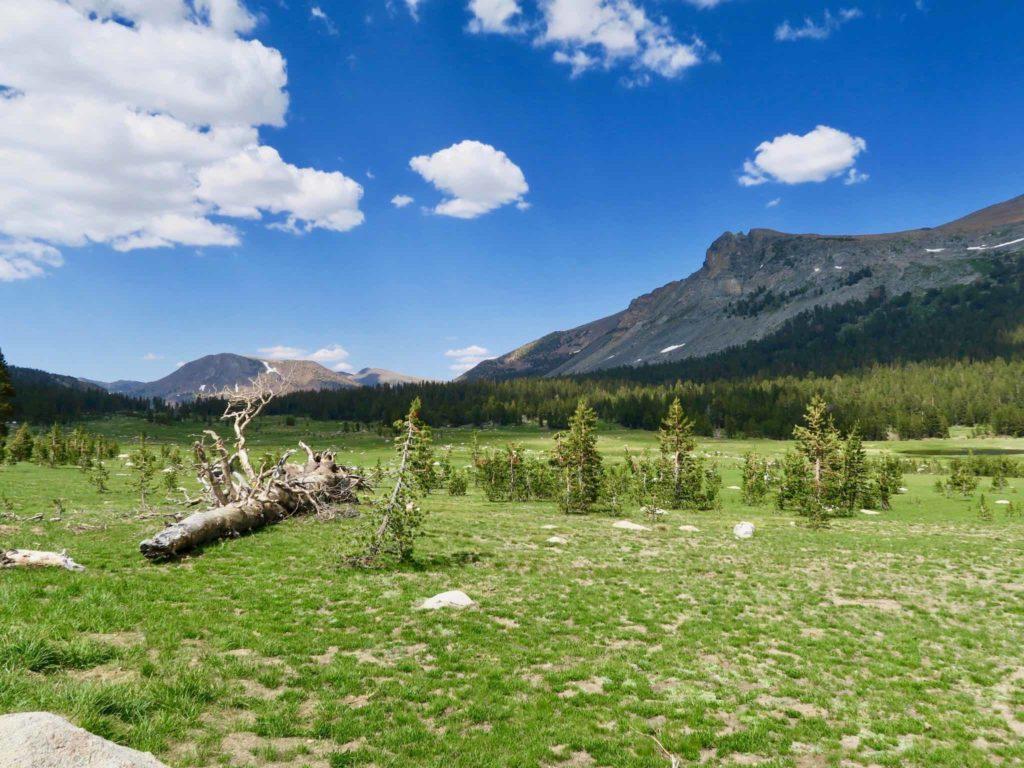 Prairies vertes et fraiches